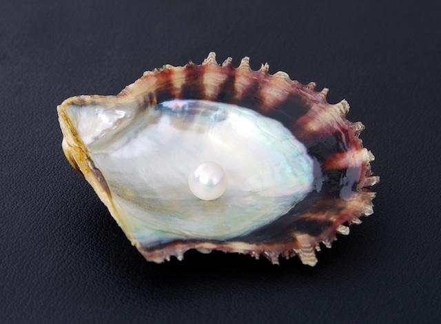 Japanese Akoya Pearl H2