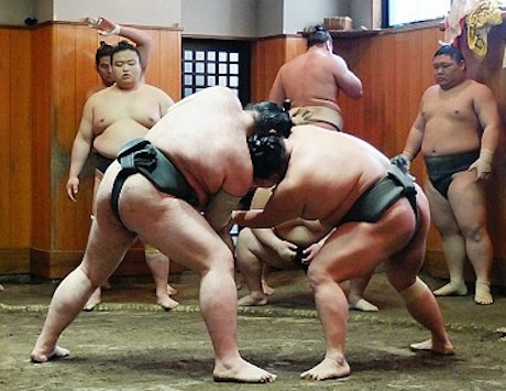 Sumo Stable|Japan Guide